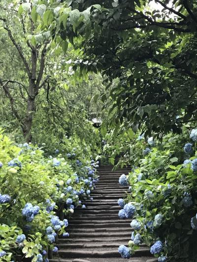 曇り時々小雨の鎌倉あじさい散歩 明月院から小町通りへ