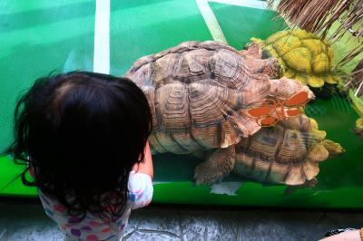 香港★屯門へ行こう 爬虫類が見られる ~屯門公園爬蟲館~