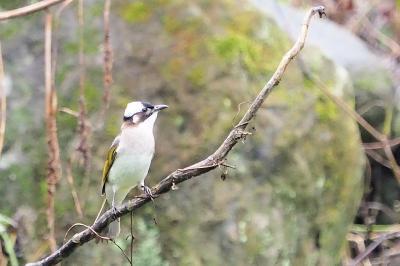 梅雨 台湾山岳部の旅 ⑤ 杉林渓森林生態リゾートエリアパーク 帰国