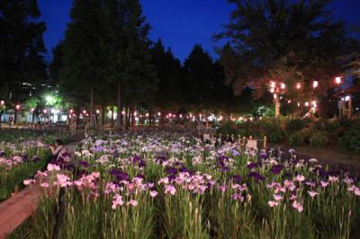 しょうぶ沼公園で花菖蒲を観賞(ライトアップも)2019年6月
