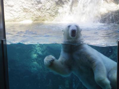 4・6歳児連れ、UA特典で日帰り旭山動物園