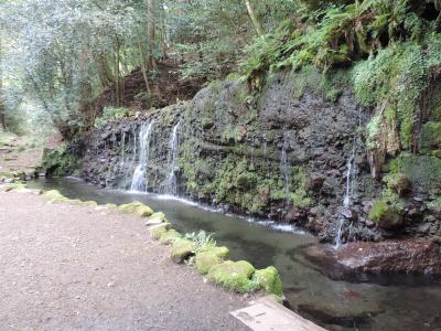 大人の遠足その1 「新緑の中、山と滝を楽しむ 鷹巣山・飛竜ノ滝」 小涌谷から畑宿縦断コース