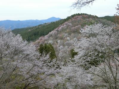 2019年4月吉野山・奈良