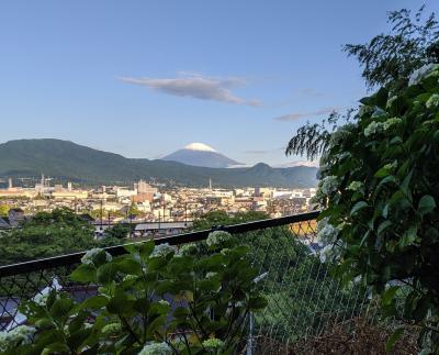 開成町の紫陽花と花菖蒲と富士山と散歩