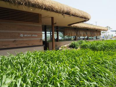 「藤い屋・IROHA village」でランチ&温井ダムで迫力満点の放流見学!