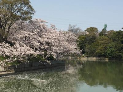 2019春の愛知★ 大池公園でお花見