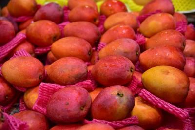 旬を迎えたアップルマンゴーに惹かれて台湾に 花蓮グルメ紀行