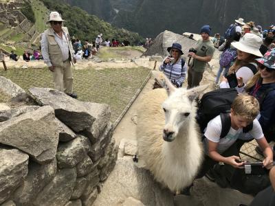 南米ペルー マチュピチュ観光  素敵なインカの遺跡