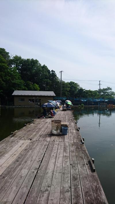 さすらい釣り師旅情編1 宮城弁天池でヘラブナ釣り 釣りとグルメと乗り鉄と