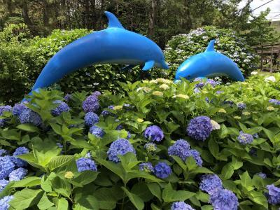 梅雨の晴れ間にシーパラ!紫陽花&パラダイスクルーズ、アオキでランチ♪