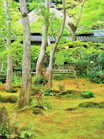 京都平成43 奥嵯峨b 祇王寺 苔の庭 ☆[青もみじと苔めぐり] 最初に訪ね