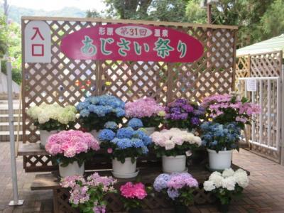 形原温泉・あじさいの里のあじさい祭りへ行ってきました(愛知県 蒲郡市) 2019年