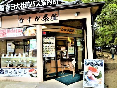奈良の一日乗車券×3日(1/3);フジの春日大社と鹿♪