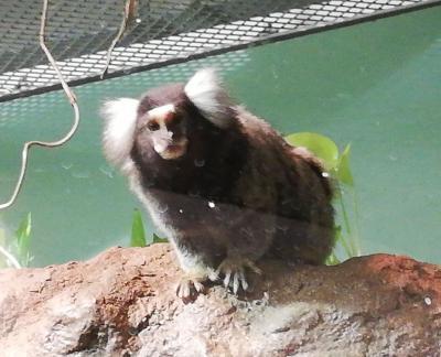 茨城で動物園