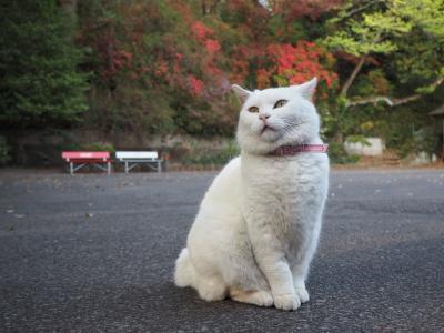 平成最後の御朱印巡り、栃木県佐野市にある唐澤山城跡の唐澤山神社へ参拝それと猫ちゃんに会いに