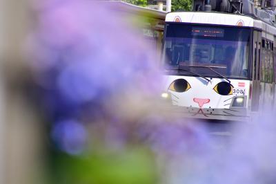 東急世田谷線「幸福の招き猫電車」と沿線に咲き広がる紫陽花の風景を探しに訪れてみた