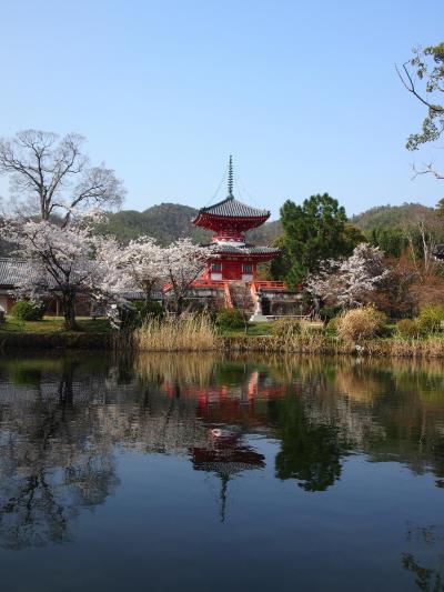 春の京都2019 一人旅 その2 ~車折神社・嵐山・大覚寺・りらっくま茶房・安井金比羅宮~