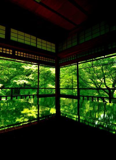今年もやってきた瑠璃光院の夜間ライトアップだが昼と夜の部両方拝観したら、なんとまあ~拝観料が8000円と京都一高い料金に驚かされた(+_+)