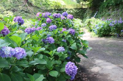 和歌山電鉄貴志川線と紫陽花を求めて和歌山城へ一人旅