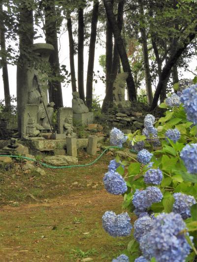 初夏の訪れを告げる国宝浄土寺裏山のあじさい