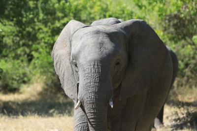 南部アフリカ紀行3日目、ボツワナ・チョベ国立公園ゲームサファリ
