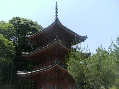 トキソウが自生するヒイゴ池湿地と雪舟ゆかりの井山宝福寺
