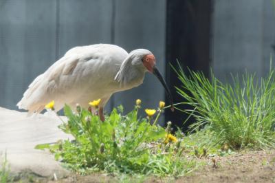 GW明けの石川県で動物たちに会ってきたお話 3 続・続・いしかわ動物園と夕食の部