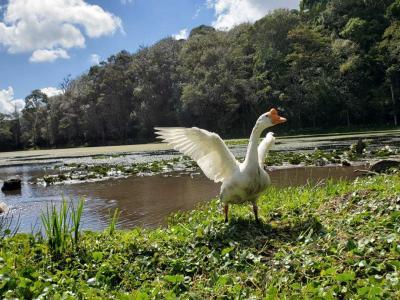 ニカラグア マタガルパへの旅 Selva Negraでまったりランチ