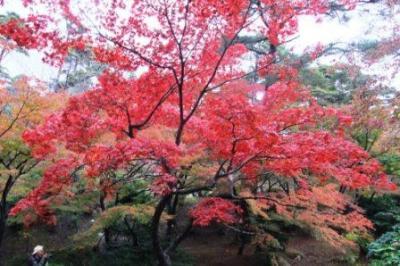 紅葉ドライブin新潟