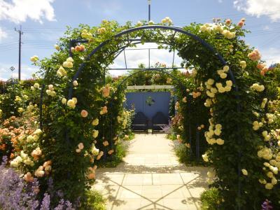 中之条ガーデンズ・・色とりどりの薔薇たちに会いに・・♪