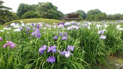 岡山後楽園で花菖蒲と蓮の花を楽しむ