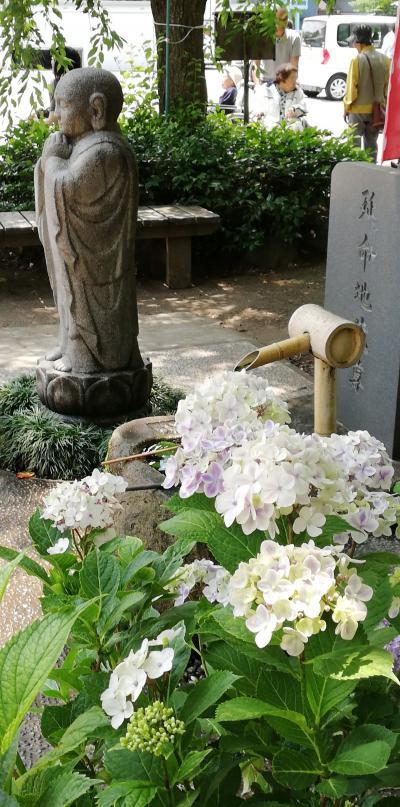 茨城で紫陽花(水戸市)