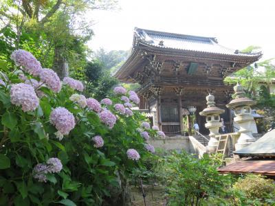 紫陽花鑑賞のため花の寺・長谷寺へ