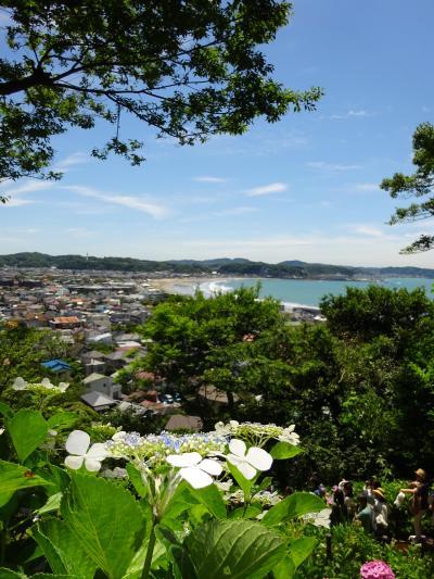 紫陽花を見に長谷寺へ
