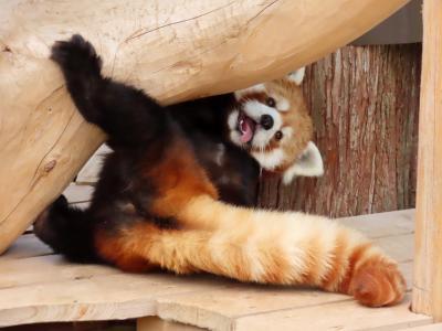 秋吉台自然動物園サファリランド 会いに行けるアイドル!! 相変わらず人の心を捉えて離さない優香ちゃんの可愛らしさにノックアウト!!