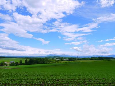 2019年6月 北海道に集まれ(´▽`)ノ 令和最初の旅は北の大地!③美瑛の丘へ絶景ドライブ~**