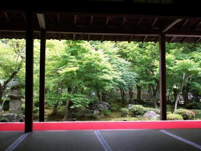 2019初夏の京都、下鴨から一乗寺