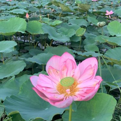 初一人海外旅行☆。.:*inハノイ③旧市街地~タイ湖ロータス❁