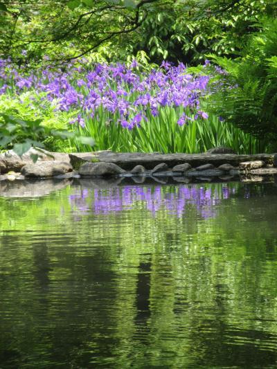 根津美術館へ尾形光琳の燕子花図と庭園の燕子花との競演