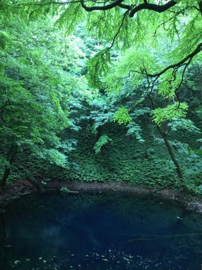 田沢湖・乳頭温泉、五能線・青池★国内最北記録更新