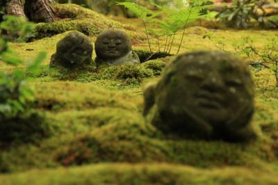 京都の初夏 - 深緑と苔と夜景【2】三千院の聚碧園と有清園