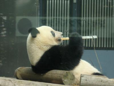 祝・シャンシャン2歳!上野動物園と 上野公園あじさいめぐり
