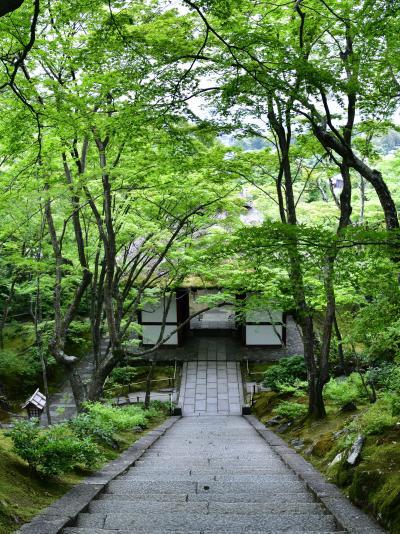 初夏の京都、青もみじが素敵で、とても静かな嵯峨野の常寂光寺へ ☆(^з^)☆