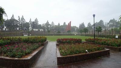 伊丹市荒牧地区の散歩で、バラ公園で突然の雨にあった 下巻。