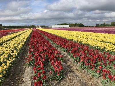 2019ゴールデンウィーク ベルギーオランダ7日間の旅⑥
