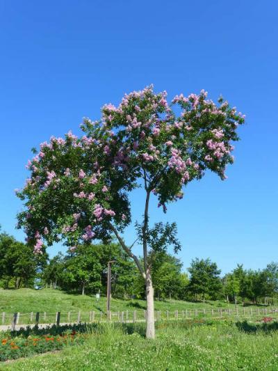 花の季節!県営馬見丘陵公園(4)