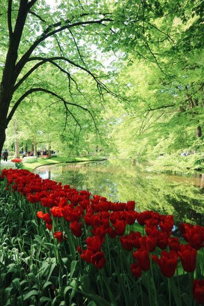 春のチューリップ旅 アムステルダム