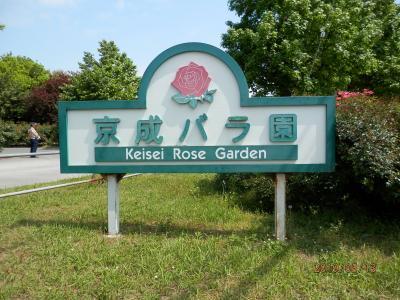 京成バラ園~凄すぎる~薔薇の種類