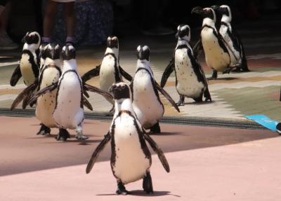 赤ちゃんたちに会いに再訪したアドベンチャーワールドは5月の猛暑日(6)ペンギン王国と海獣館とふれあいの里とふれあい広場など様々な動物たち