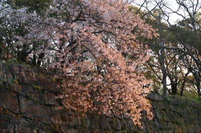 和歌山城の桜と海の幸